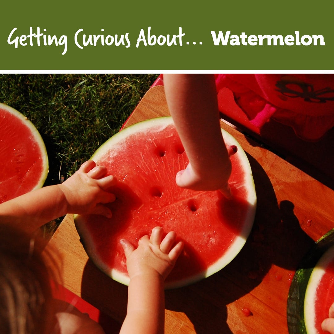 Getting Curious Watermelon